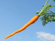 Free Young Carrots Skyline. Royalty Free Stock Image - 15438896