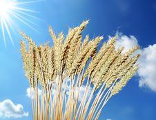 Free Wheat On Blue Sky Background Stock Photos - 15439073