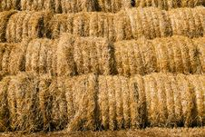 Free Harvest(cleaning) Of Cereals Stock Photo - 15439160