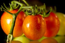 Free Fresh Tasty Red Tomatoes Royalty Free Stock Images - 15439699