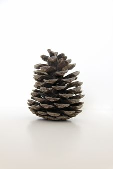 Isolated Old Pine Cone Stock Photo