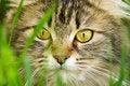 Free Cat Eyes Stock Photography - 15447002