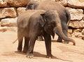 Free Young Elephant Stock Photo - 15449090