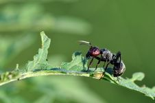 Free Ant Royalty Free Stock Photography - 15440547