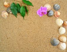 Free Tropical Background Royalty Free Stock Image - 15440746