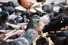 Free Group Of Pigeons Stock Photography - 15441602