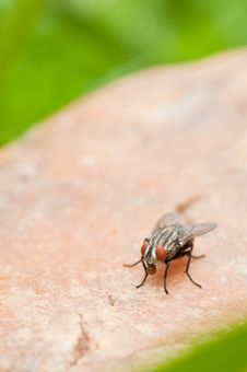 Free Fly On A Rock Stock Images - 15441934