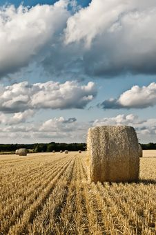 Free Hay Bale Roll On Field With Clouds Stock Images - 15442154