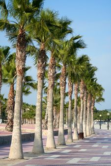 Free Palm Trees Stock Images - 15447944