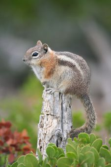 Free Squirrel On A Post Stock Photos - 15447953