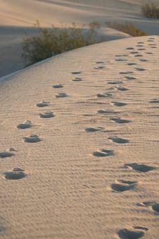 Desert Dune Footprints Royalty Free Stock Images