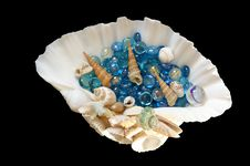 Free Sea Shell Stock Images - 15448594
