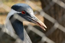 Free Stork Stock Image - 15449101