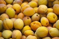 Free Fresh Yellow Apricots Royalty Free Stock Image - 15455606