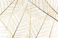 Free Skeleton Leaf Background Stock Images - 15451644