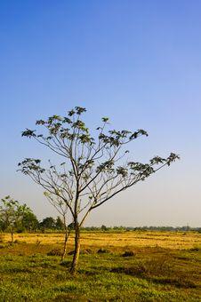 Free Tree Stock Photos - 15451653