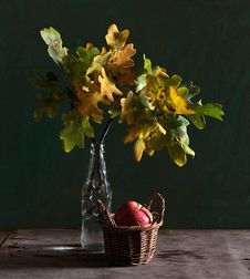 Still Life With The Leaves Of Oak And Apple Stock Photo