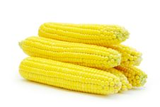 Free Maize Stock Photography - 15454932