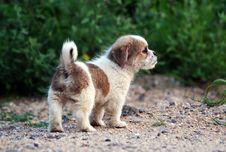 Free Cute Puppy Stock Photos - 15457033