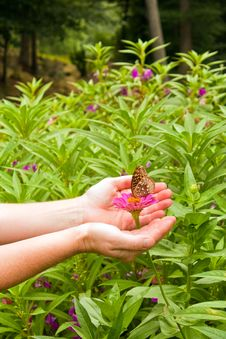 Free Friendly Butterfly Royalty Free Stock Photography - 15458047