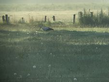 Free Early Stork With Fluff Royalty Free Stock Photography - 154505057