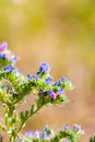 Free Blue Wild Flowers Stock Images - 15466734