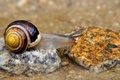 Free Snail On The Stone Royalty Free Stock Photography - 15467217