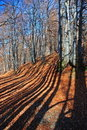 Free Road To Autumn Wood Stock Image - 15468941