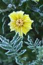 Free Hoarfrost On Velvet Stock Photo - 15469110