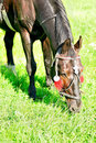 Free Horse Smell The Grass Royalty Free Stock Photos - 15469728