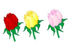 Free Vector Illustration  Red ,yellow,pink Roses Royalty Free Stock Image - 15462976