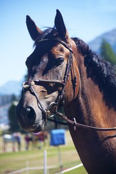 Free Horse Stock Images - 15463044
