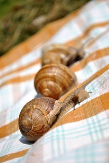 Free Snail Picnic Royalty Free Stock Photography - 15463887