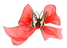 Free Ribbon  Butterfly Royalty Free Stock Photo - 15465545