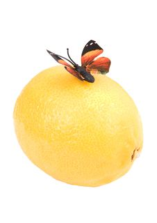 Butterfly On A Lemon Stock Images