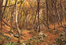 Free Colourful Forest Stock Photos - 15467063