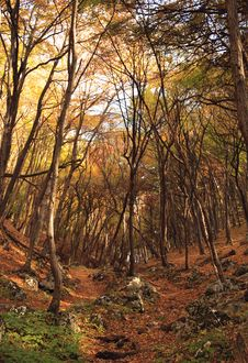 Free Colourful Forest Royalty Free Stock Photography - 15467087