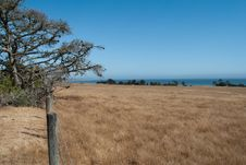 Free Grassland By The Sea Stock Photography - 15467732