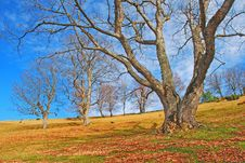 Free Autumn Hillside. Royalty Free Stock Images - 15468809