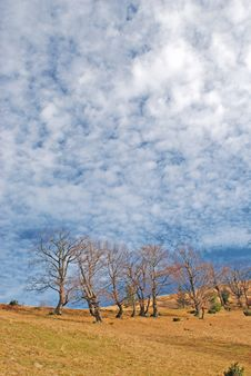 Free Autumn Hillside. Stock Photography - 15468842