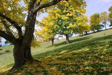 Free Autumn Hillside Stock Image - 15469051