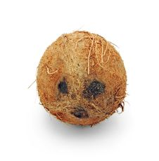 Free Coconut Face Stock Photography - 15469722