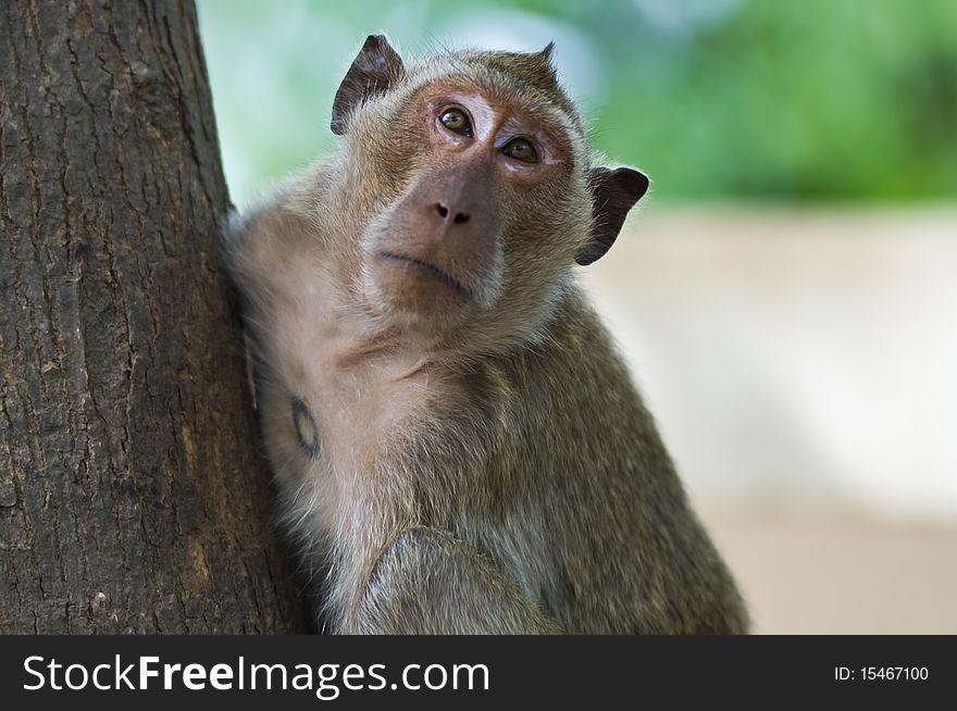 Monkey on a tree.