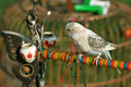 Free Bird Sitting On A Colorful Branch Stock Photo - 15471160