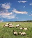 Free Wild Horses. Royalty Free Stock Images - 15472979