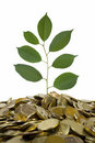 Free Coins And Plant Stock Images - 15473124