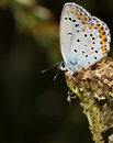 Free Butterfly 2 Stock Photography - 15475832