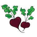 Free Fresh Vegetable Beet Royalty Free Stock Photo - 15477175