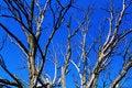 Free Dead Tree Royalty Free Stock Photos - 15479658