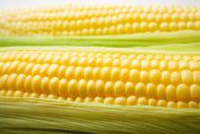 Free The Corn On White Royalty Free Stock Photo - 15473015